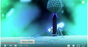 Penemu CRISPR-Cas9 Ungkap Teknologi Edit DNA yang Bisa Mengubah Segalanya